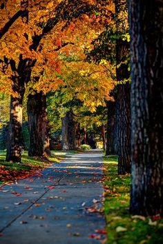 A beautiful fall day in Spokane, Washington Autumn Scenes, Fall Pictures, Random Pictures, Nature Wallpaper, Hd Wallpaper, Belle Photo, Beautiful Landscapes, Background Images, Editing Background