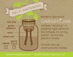 Mason Jar Herb Kit SelfWatering Planter for by ModernSprout garden vegetable apartments mason jars Mason Jar Herb Kit - Self-Watering Planter for Growing Basil Mason Jar Herbs, Mason Jar Herb Garden, Herb Garden Kit, Mason Jars, Mason Jar Planter, Container Herb Garden, Herb Planters, Garden Ideas, Glass Garden