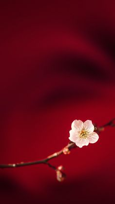 Flower in Red - Tap to see more #Oppo #stockwallpapers - @mobile9