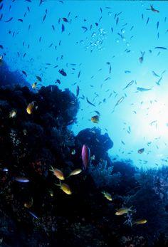 【H.I.S.】【Ceb island】カラフルなお魚たちとダイビング!日本からたった4時間のアジアビーチリゾートです。 #his_blue