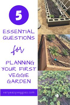 Before you get out the garden planner to figure out your garden layout and design, here are a few questions everyone should consider before you start a beginner vegetable garden. From the best garden method for you to how to choose a spot for a garden and how to water, to how to choose vegetables for beginners. Vegetable Garden For Beginners, Gardening For Beginners, Vegetable Gardening, Gardening Tips, Garden Planner, Starting A Garden, Companion Planting, Raised Garden Beds, Growing Vegetables
