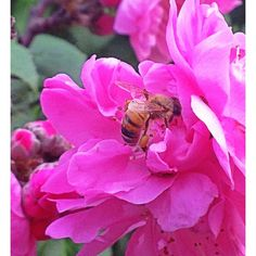 Blossom &  #bees.