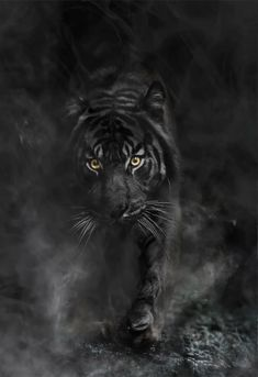 Who& Afraid of the Darkness 10 is part of Black tigers The enemy uses subtlety to deceive his victim He makes things seem harmless and beautiful but in reality it is lethal with devastating conseq - Anime Animals, Animals And Pets, Cute Animals, Wild Animals, Big Cats, Cats And Kittens, Cute Cats, Tiger Wallpaper, Animal Wallpaper