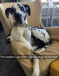 75 Funny Pictures For Today #52