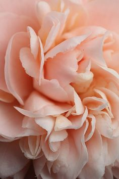 Flower - smell of beauty, comfort, safety, lush, organized.