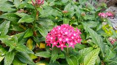 Tiny flowers. Flores minúsculas