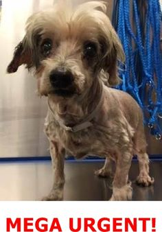 URGENT! Very Sweet Geriatric Dog with Multiple Medical Problems, A1791270, Needs Rescue ASAP under foster 2 rescue. — Miami Dade County Animal Services. https://www.facebook.com/urgentdogsofmiami/photos/a.474760019225073.115405.191859757515102/1218719728162428/?type=3&theater
