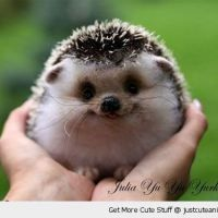 A happy little hedgehog