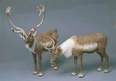 needle felted reindeer - Yahoo Image Search Results