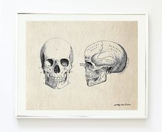 Vintage Skull Anatomy Art Print - Antique Curiosity Art Prints - Head - Anatomy - Art Print - Wall Art - Curiosities on Etsy, $18.00