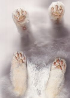 stop and pause for the cat scan (copy cat'd from Sam Palmer)