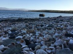 7. Rome Point Trail, Saunderstown