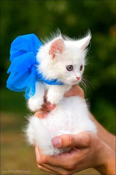i better have a kitten wrapped in a bow for my birthday. (; @Kimberly Howard
