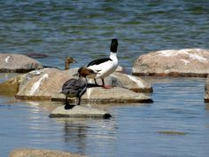 photos from my archive World Wetlands Day, Photo Grouping, Photo Archive, Nature Photos, The Outsiders, Environment, Pictures, Animals, Image