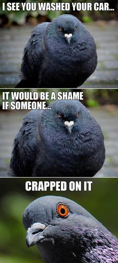 Bird Poop Meme | 30 Funny animal captions - part 9, funny animal memes, funny animals ...