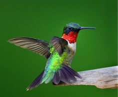 Flying Colors - Photograph at BetterPhoto.com