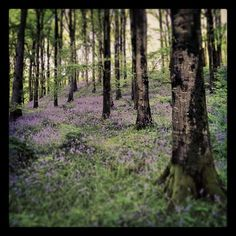 Portglenone forest, Northern Ireland. My own. Colour photography. Woodland. Forest. #inkedandtwisted