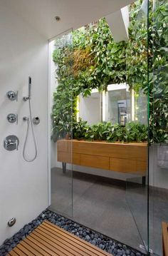 indoor plants with shower