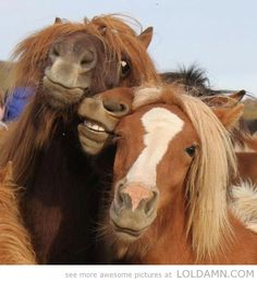 When drunken girls try to pose for a picture…funny horses