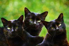 three graces by Ludmila Shumilova - Photo 132042721 - 500px