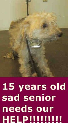 ~ Animal ID #A1552728 *** 15 Year Old SENIOR ALERT!!! *** ‒ I am a Female (Spayed), Cream Toy Poodle mix. The shelter thinks I am about 15 years old. I have been at the shelter since May 04, 2015. West Valley Animal Care and Control Center Telephone ‒ (213) 485-8405 20655 Plummer Street Chatsworth, CA Fax: (818) 756-9111 https://www.facebook.com/OPCA.Shelter.Network.Alliance/photos/pb.481296865284684.-2207520000.1431110351./817956418285392/?type=3&theater