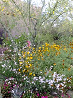 Center for Desert Living Trail-Desert Botanical Garden
