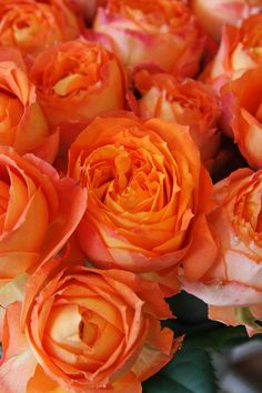 Beautiful Orange Roses which are my sons favorite color. At his wedding they added this color to her favorite color which is purple and that's my favorite color also. For the spring wedding it was a beautiful contrast against her white wedding gown. So you can match orange and purple and never fail.
