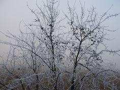 Bodegas Obergo en blanco. ¡El invierno ha llegado para quedarse!