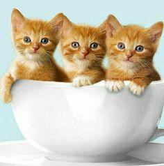 .3 kitties in a bowl