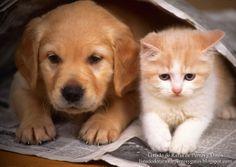 Protectoras de animales de España - Refugios de gatos y perros