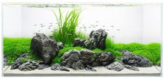 Stunning Aquascape Design Ideas 60