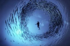 Some of the Best Humans Underwater animals Photography | Bored Daddy