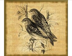 Vintage birds print Sepia or Black Digital download graphic image for iron on fabric transfer burlap decoupage pillows No. 812. $1.00, via Etsy.