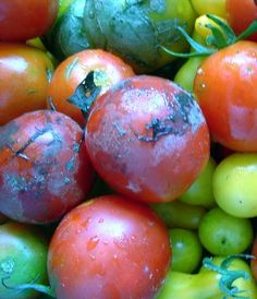 The Best Heirloom Tomatoes