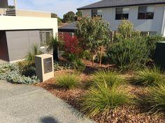 Native Australian Plants. Native Garden. Perth, WA. Landscape Design.