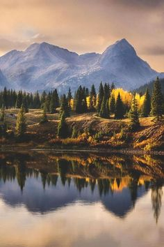 Molas Lake, Colorado - yellow birches erupt in autumn foliage and are reflected by the lake.
