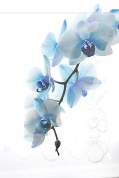 Blue Orchid 02 by FallenSamurai on DeviantArt