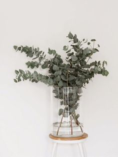 Green foliage may just be our new favourite flower. Swap out flowers for thick foliar blankets of oak, ivy and blue eucalyptus for a different arrangement. Bouquet D'eucalyptus, Bridal Bouquets, Plantas Indoor, Magazine Deco, Deco Floral, Green Plants, Green Life, Houseplants, Indoor Plants
