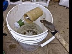 Best Mouse Trap Ever - Mice Trap Catches dozens of mice alive without having to reset trap - YouTube