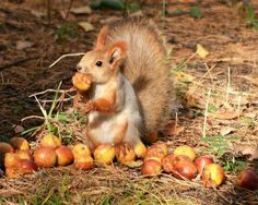 Busy Squirrel