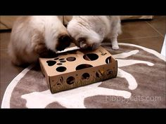 Puzzle Toy for Cats - CatAmazing - Ragdoll Cats Receive for Testing - ラグ...