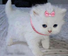 Princess kitty