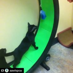 Now that's teamwork! Some people laugh but cat wheels are AMAZING! #teamwork #kittens #adorable #kittensofinstagram @one_fast_cat @aawlspca  #Repost