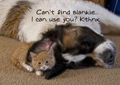 TOP 48 FUNNY CAT MEME