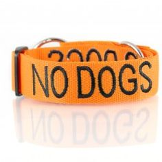 NO DOGS Orange Color Coded Semi-Choke Dog Collar (Not Good with Other Dogs) Prevents Accidents by Warning Others of Your Dog in Advance ** See this great product. (This is an affiliate link and I receive a commission for the sales) Collar And Leash, Pet Collars, Orange Color Code, Reactive Dog, Dog Walking, Dog Owners, Dog Friends, Dog Love, Best Dogs