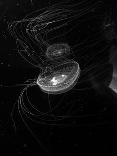 Jellyfish at Chattanooga Aquarium