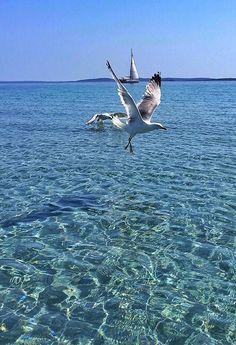 The clearest sea is on island Lošinj!