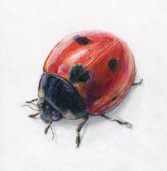Watercolor ladybugs | Alexis Demetriades Science Illustration: Ladybug on Duralene