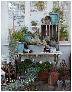 Isa's Garden: Pictures of garden past year - part 2!