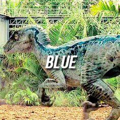 Raptor Blue Jurassic World Jurassic world Limited Edition! Michael Crichton, Jurassic Movies, Jurassic Park Series, Blue Jurassic World, Jurassic World Fallen Kingdom, Jurassic World Raptors, Science Fiction, Jurrassic Park, The Lost World